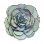 Bigz Die Succulent by Sophie Guilar